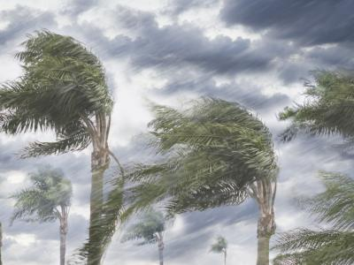 Palm trees in wind and rain
