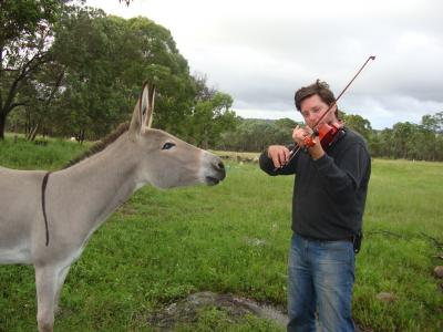 Man playing violin to donkey