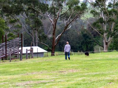 Farmer in paddock with dog