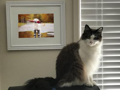 Cat sitting next to picture of dog